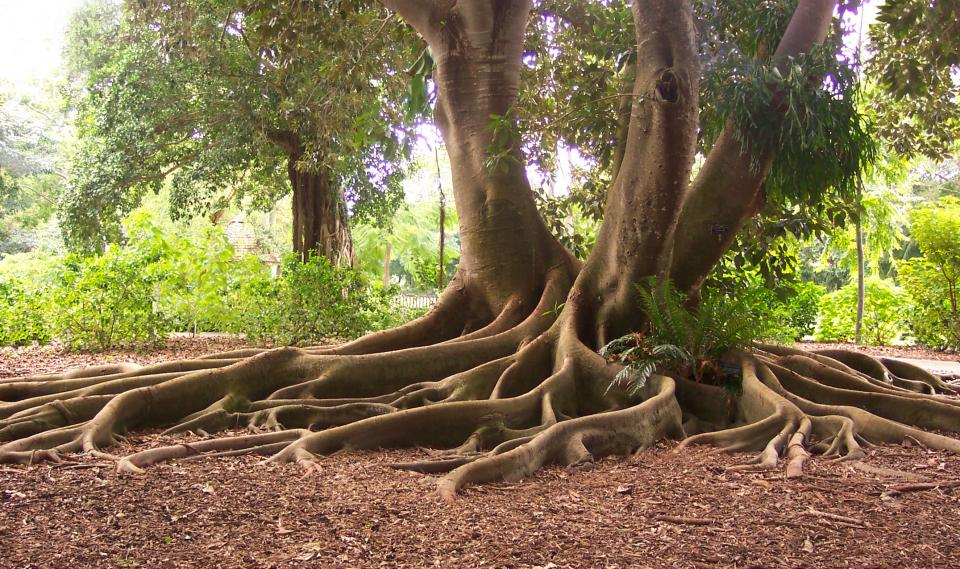Learn Your UU Roots